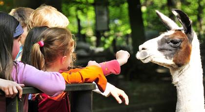 Tagesfahrt Zoo Eberswalde