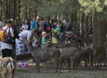 Dammwild - Tagesfahrt Tier-, Freizeit und Saurierpark Germendorf